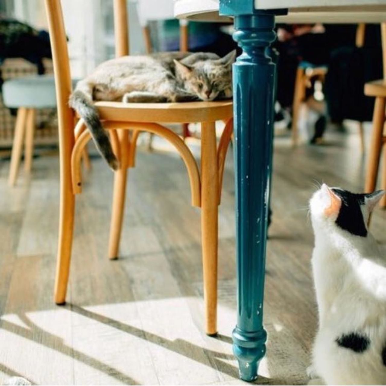 A photo of Romeow Cat Bistrot