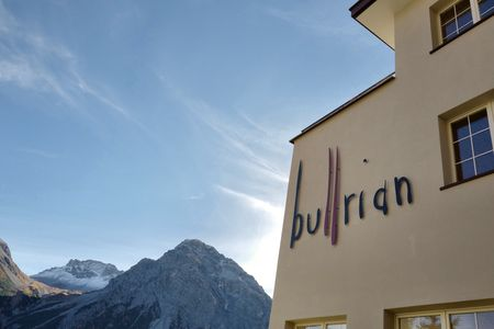 A photo of bullrian